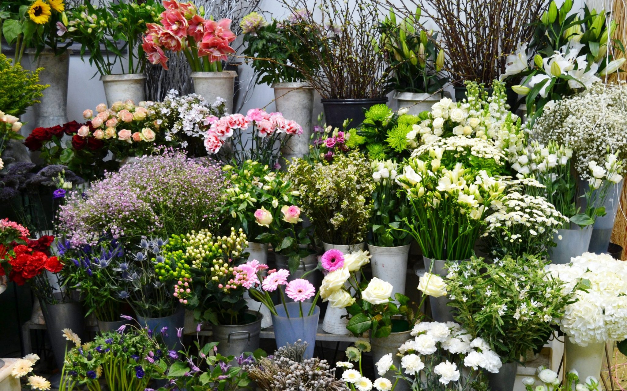 A colourful display at Floral Gallery